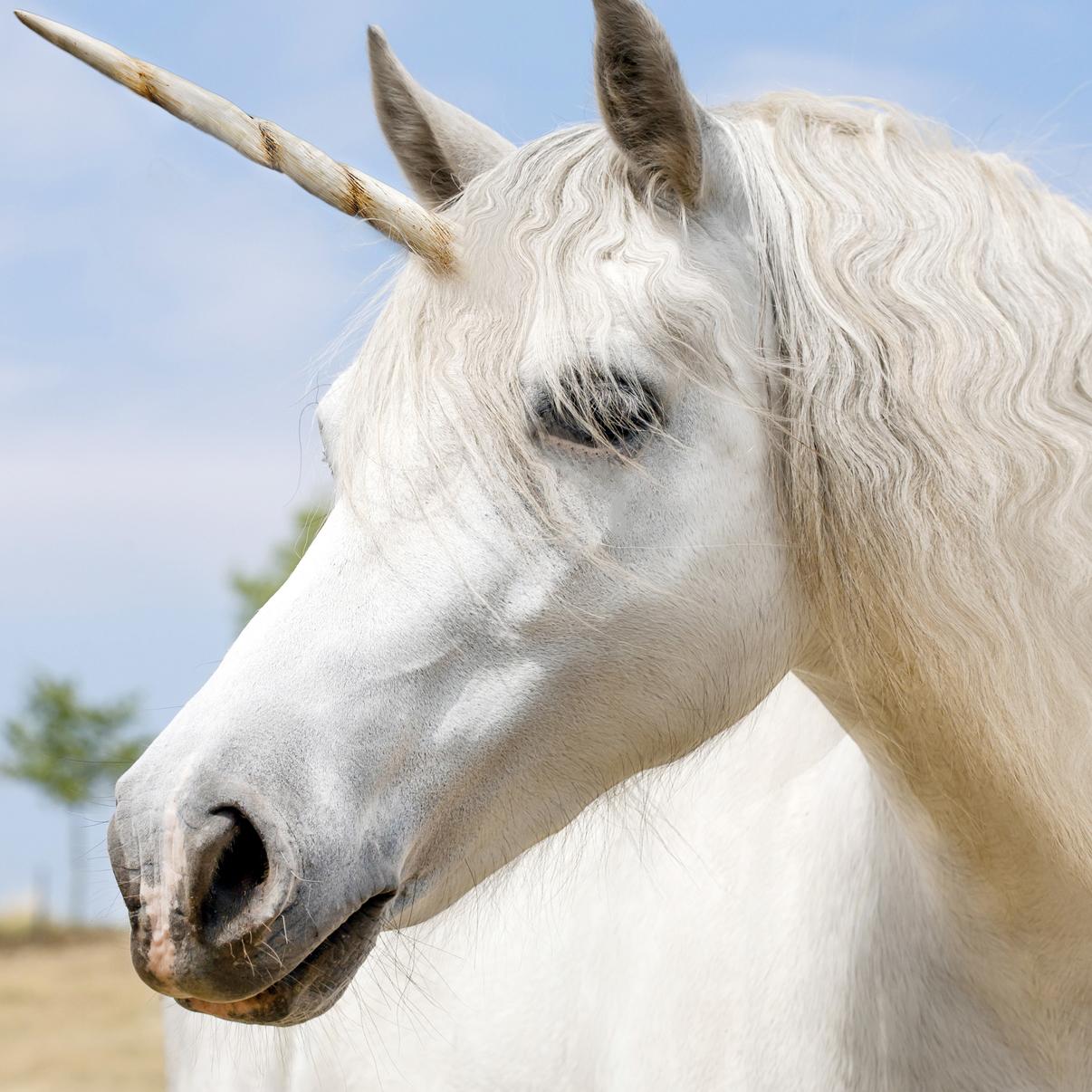 אוניברסיטת תל אביב - הישראלית היחידה ברשימת ה-Unicorns העולמית של Sage.